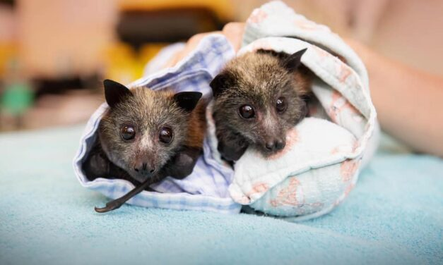 HELP FOR BUSHFIRE-AFFECTED WILDLIFE CARE GROUPS